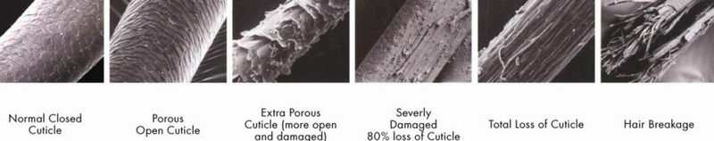 Hair Conditions under microscope