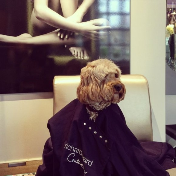Pets at Picasso Hair Studio