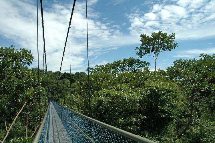 Tree Top Trails at MacRitchie
