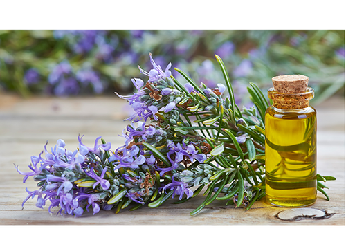Rosemary Essential Oil at Face Plus by Yamano